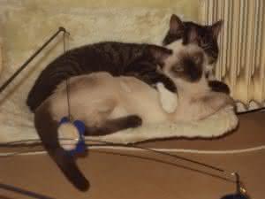 Koolhydraatarm eten voor katten